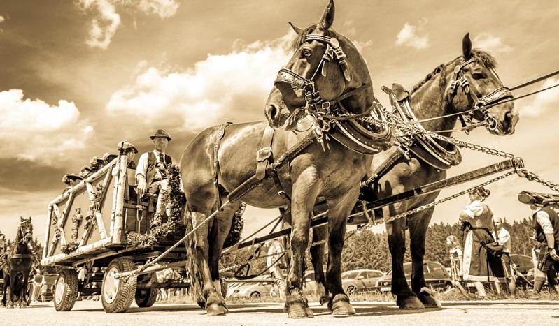 Leonhardifahrt in Dietramszell: Bayern tragen Trachten beim traditionellen Umzug mit dem Pferdewagen.( Foto: Shutterstock-FooTToo)