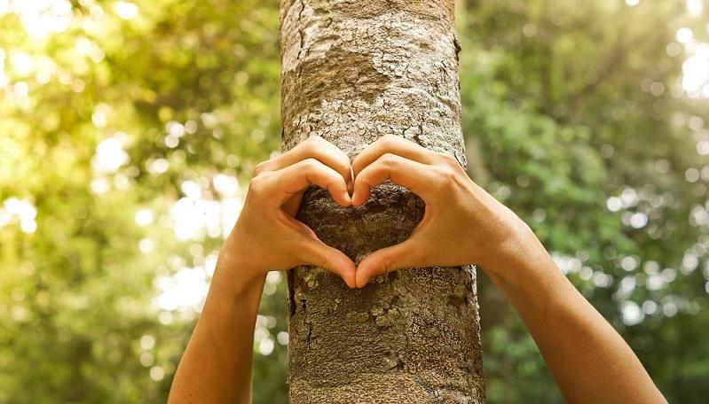 Es ist definitiv etwas Besonderes, wenn sich ein Paar in einem Baum verewigt. (Foto: Shutterstock-wk1003mike)
